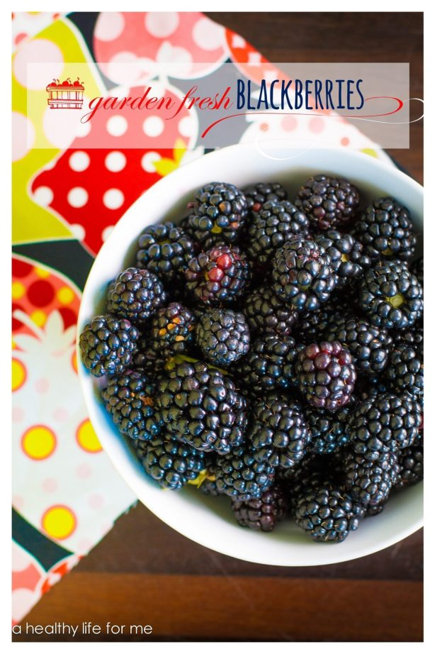 Blackberries How to Pick and Grow your own