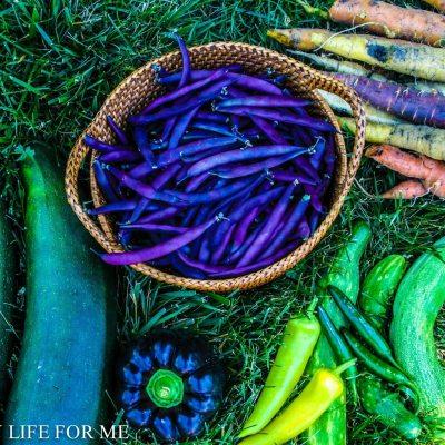 Understanding Vegetable Seeds