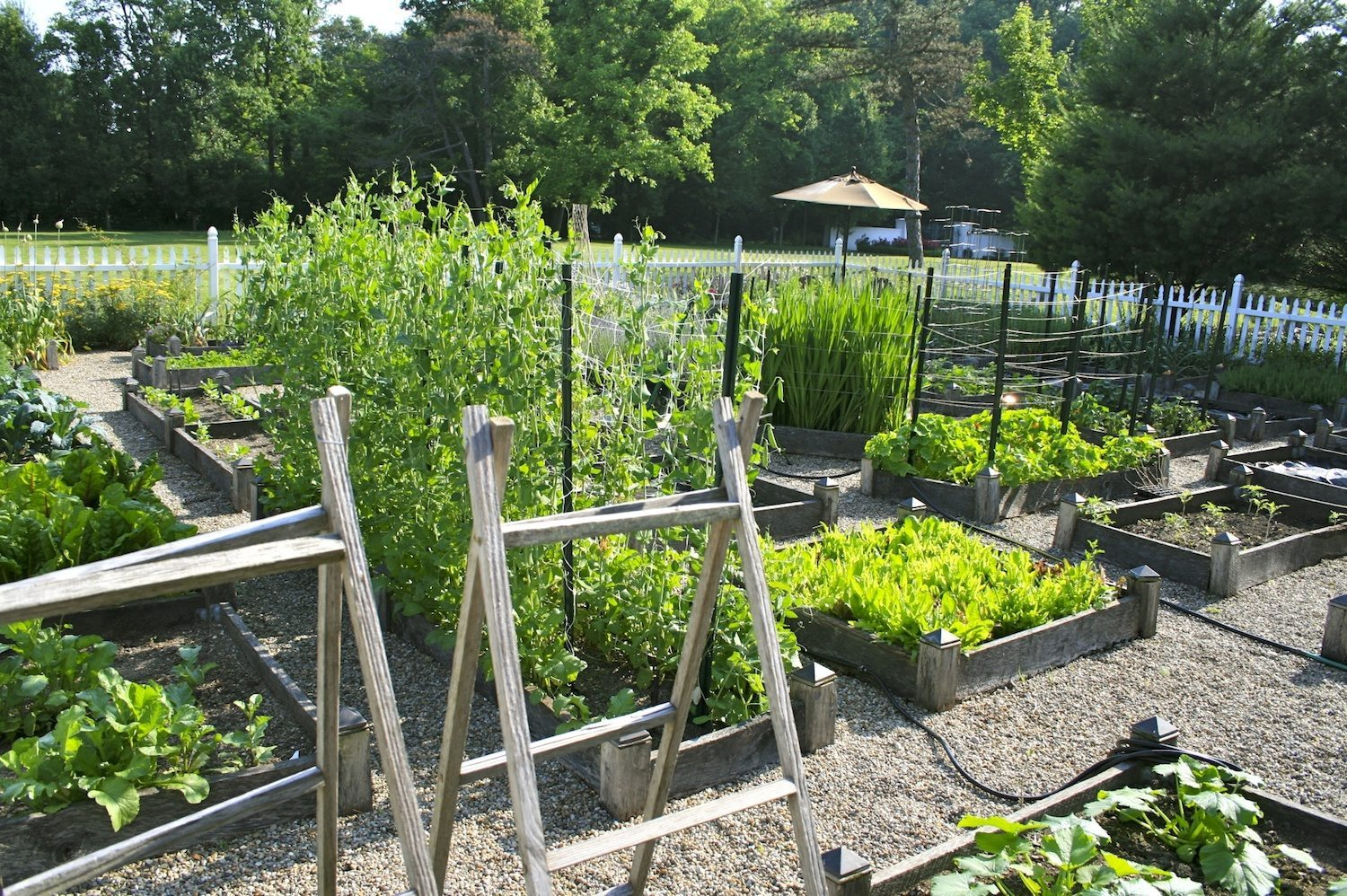 Planning ideas for your vegetable garden a healthy life for Backyard vegetable garden designs