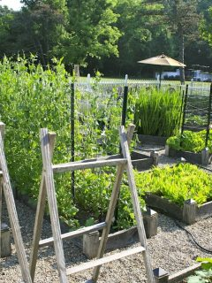 Planning Ideas for your Vegetable Garden