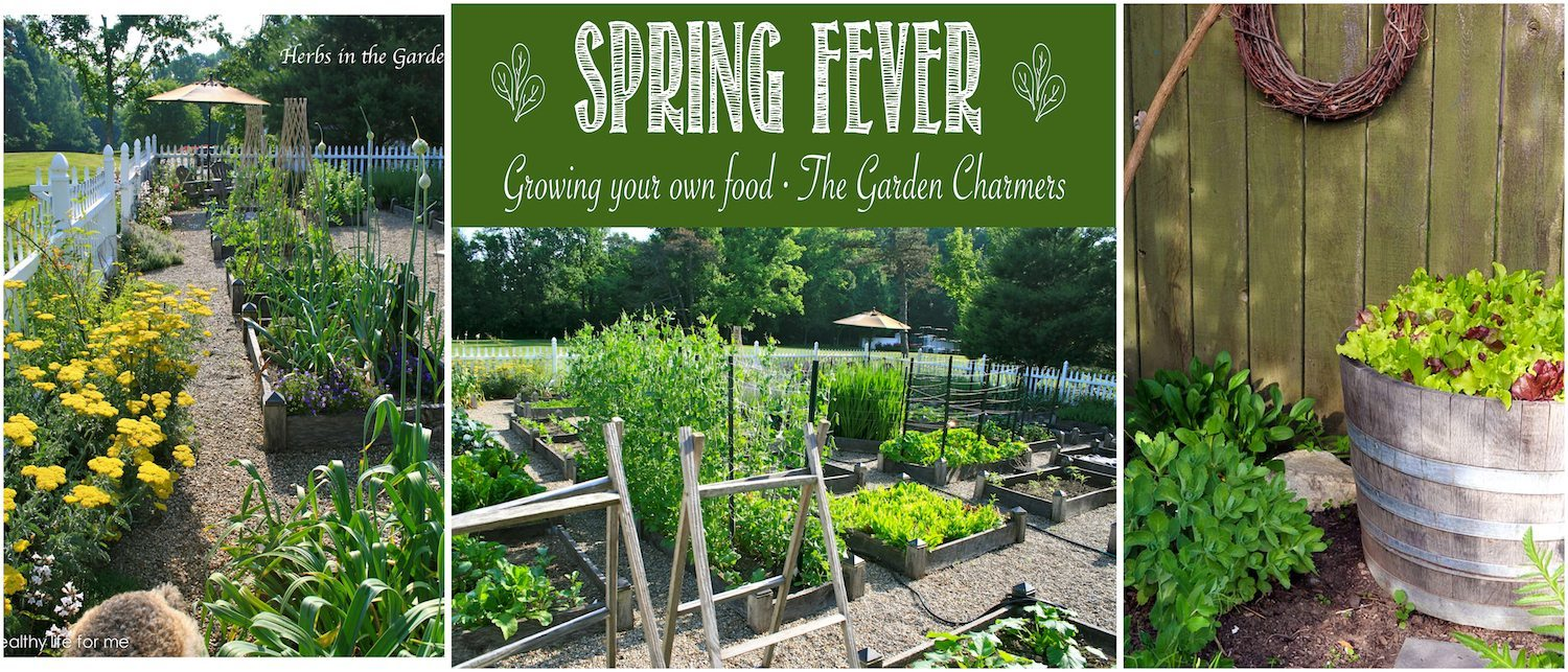 the garden charmers spring fever growing your own food planning ideas for your vegetable garden - Vegetable Garden Ideas For Spring
