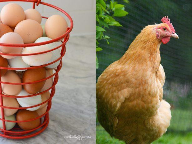 Organic Eggs and Buff Orpington Hen | DIY Eggshell Planters #EarthDayProjects