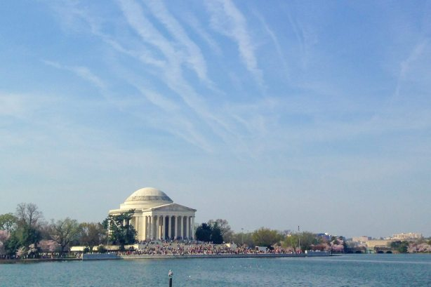 Jefferson Memorial during Cherry Blossoms Gluten Free Almond Coconut Cake