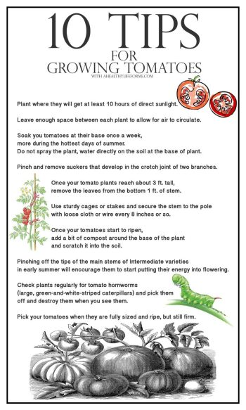 10 Tips for growing tomatoes-1