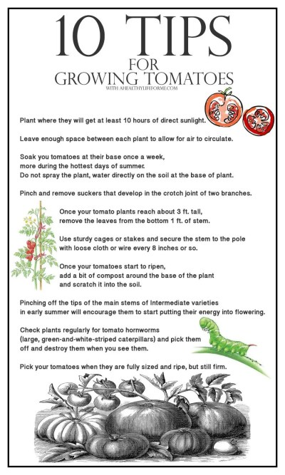 10 tips for growing tomatoes organically | ahealthylifeforme.com