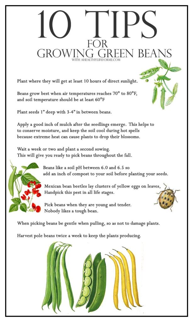 10 Tips for growing green beans   ahealthylifeforme.com