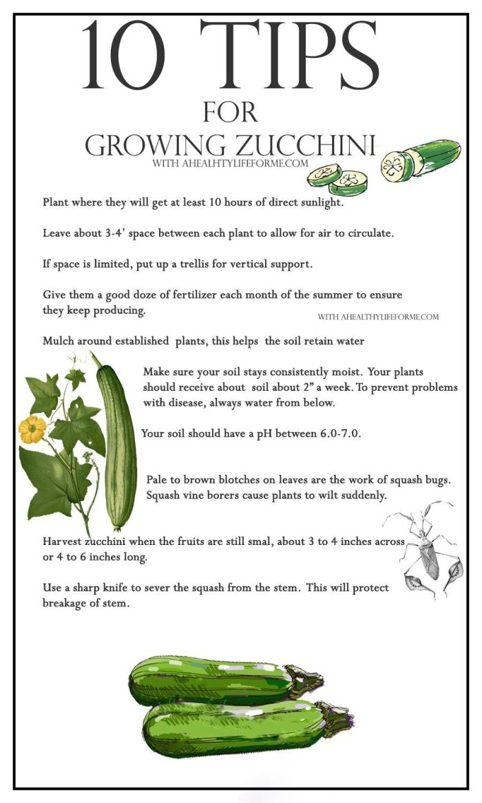 10 Tips for growing zucchini   ahealthylifeforme.com