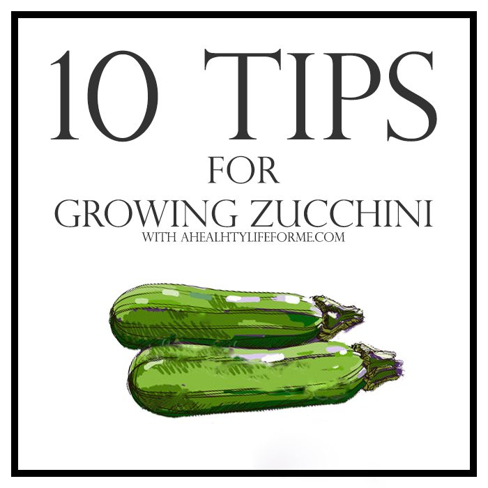 Growing Zucchini On A Trellis: 10 Tips For Growing Zucchini