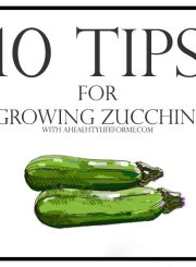 10 Tips for Growing Zucchini