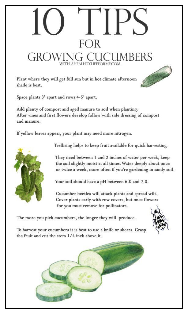 10 Tips for Growing Cucumbers | ahealthylifeforme.com
