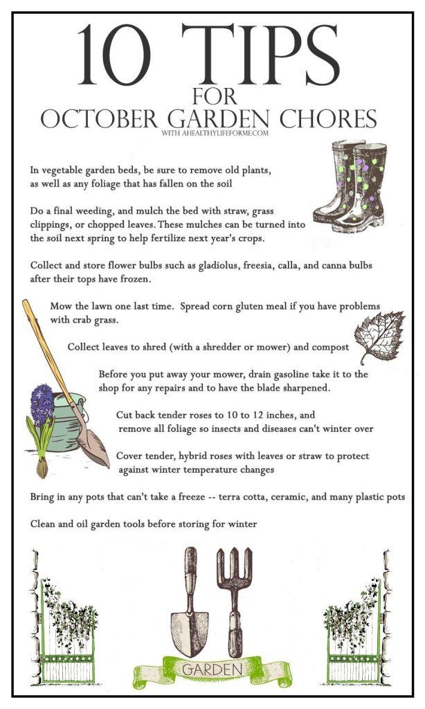 10 Tips for October Gardening   ahealthylifeforme.com