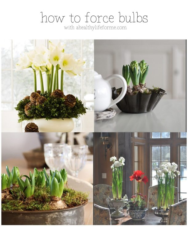 How To Force Bulbs with ahealthylifeforme.com