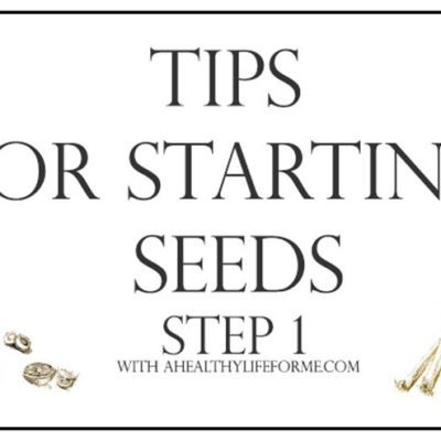 Tips for Starting Seeds Step 1 {Planting}
