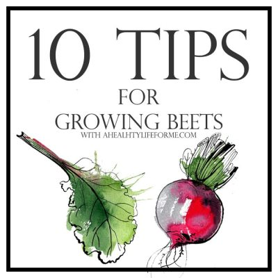 10 Tips for Growing Beets