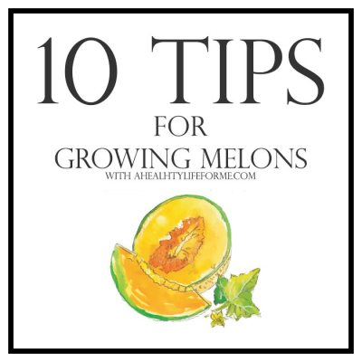 10 Tips for Growing Melons