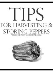 Tips for Harvesting and Storing Peppers | ahealthylifeforme.com