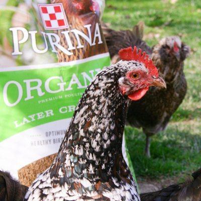 Organic Farm Fresh Eggs