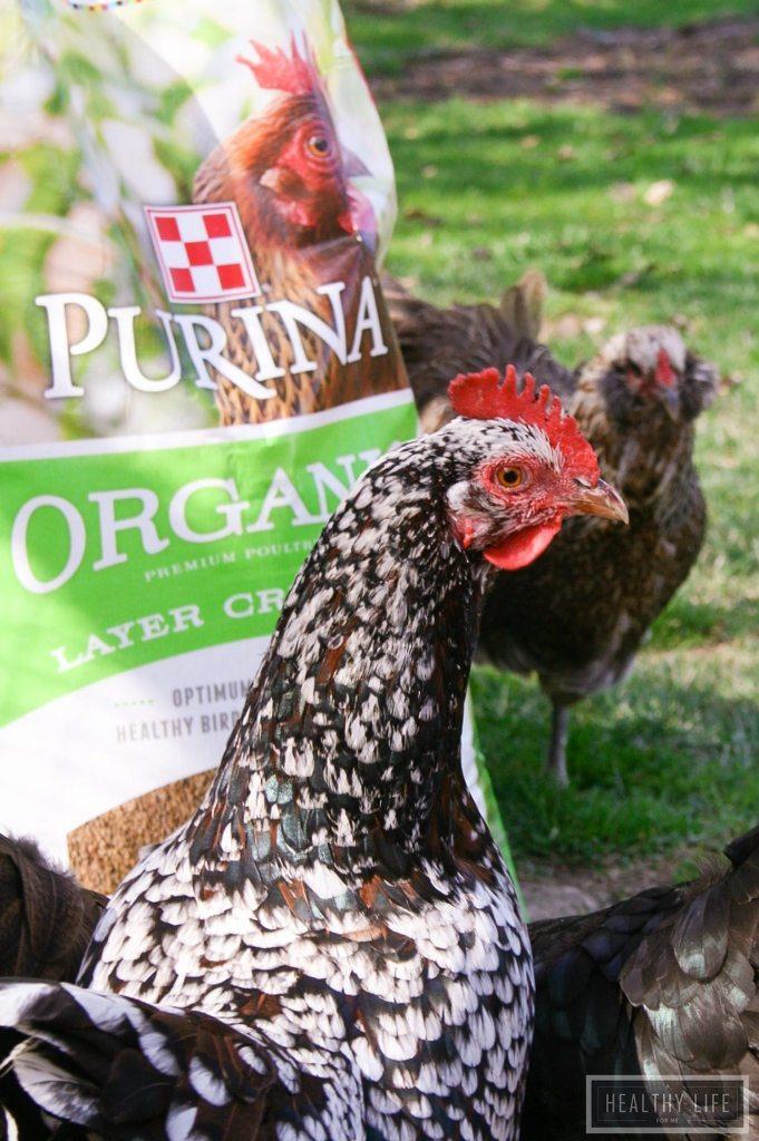 Organic Farm Fresh Eggs | ahealthylifeforme.com