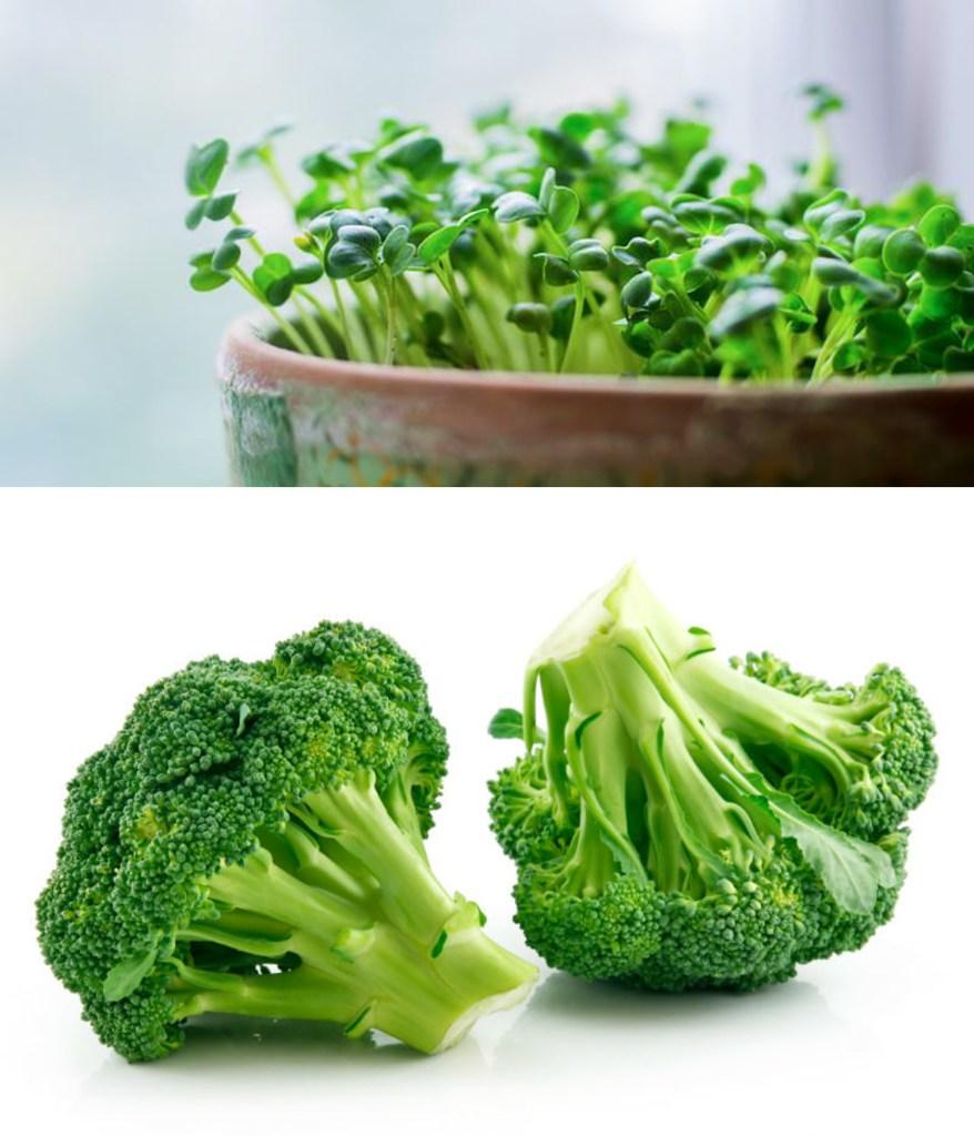 Microgreen of Broccoli