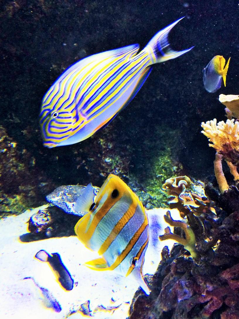 Porte Dorée Aquarium, 12th arrondissement, Paris.   ahedgehoginthekitchen.com