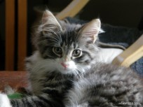 Jacky the cat