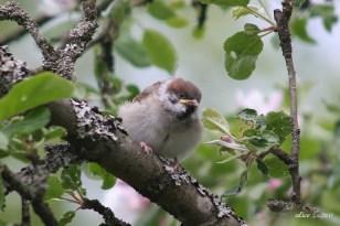 Bird IMG_5441C