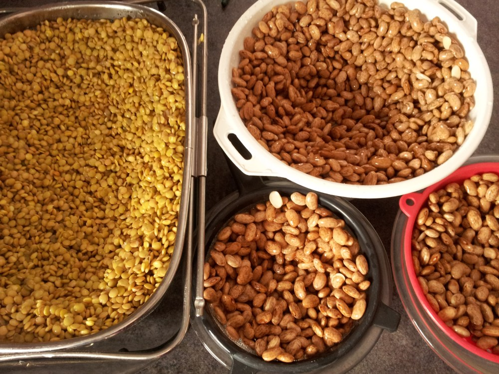 Sprouted Grains & Legumes (6/6)