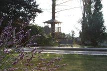 Pool through the lavender 2