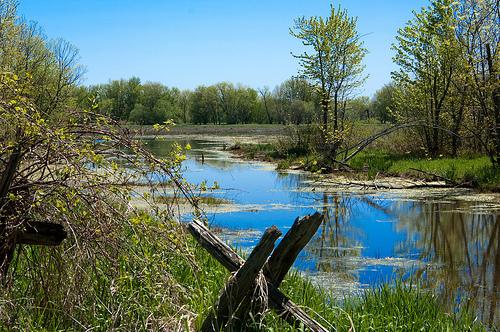 A marsh not too far away...