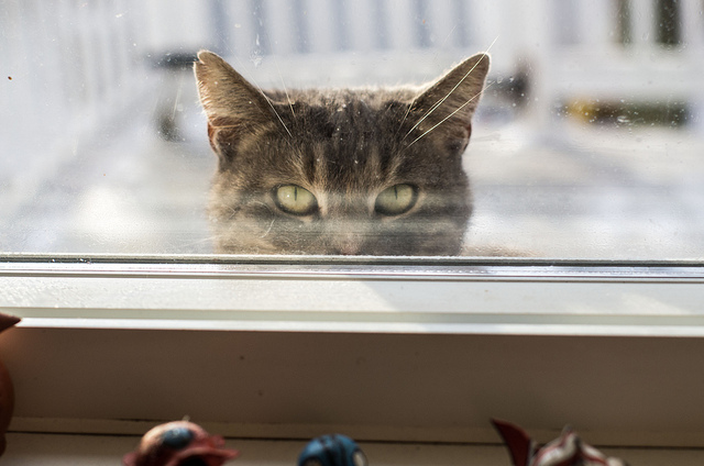 Nala... watching me while I do dishes