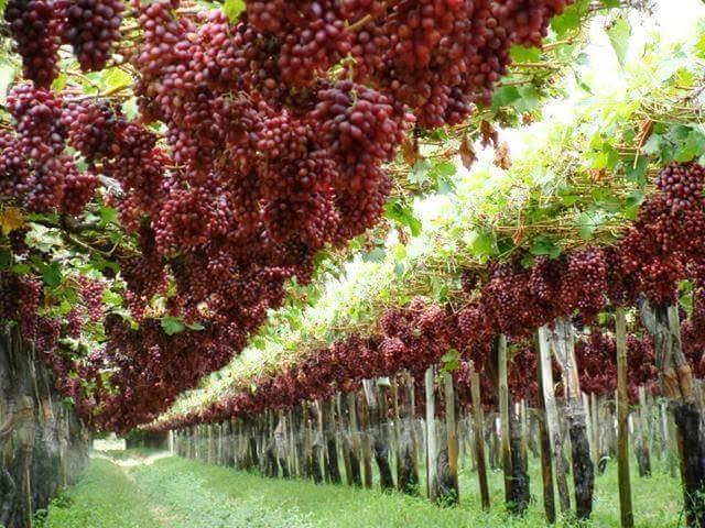 Membangun Kebun Berbasis Al-Qur'an