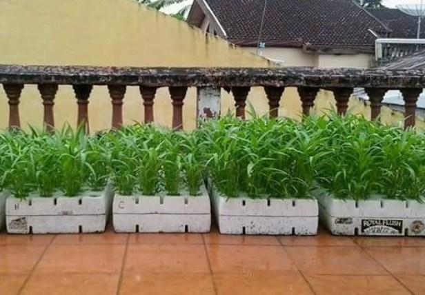 6 Faktor Sukses Budidaya Sayuran Hidroponik Kangkung