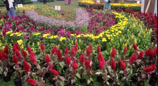 Macam-Macam Bunga Hias Favorit Dan Cara Menanamnya