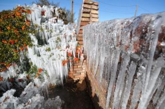 Icicles develop along a brick wall and on bushes as water from the sprinkler system freezes at a home on the corner of Willow Street and Peach Avenue in Hesperia, Calif, on Monday, Jan. 14, 2012. The extreme chill in the West comes as the eastern U.S., from Atlanta to New York City, is seeing spring-like weather. Photo: The Victor Valley Daily Press, David Pardo Read more: http://www.ctpost.com/news/science/article/Bitter-cold-grips-West-citrus-and-lettuce-damaged-4191498.php#ixzz2Iwkw5eR0