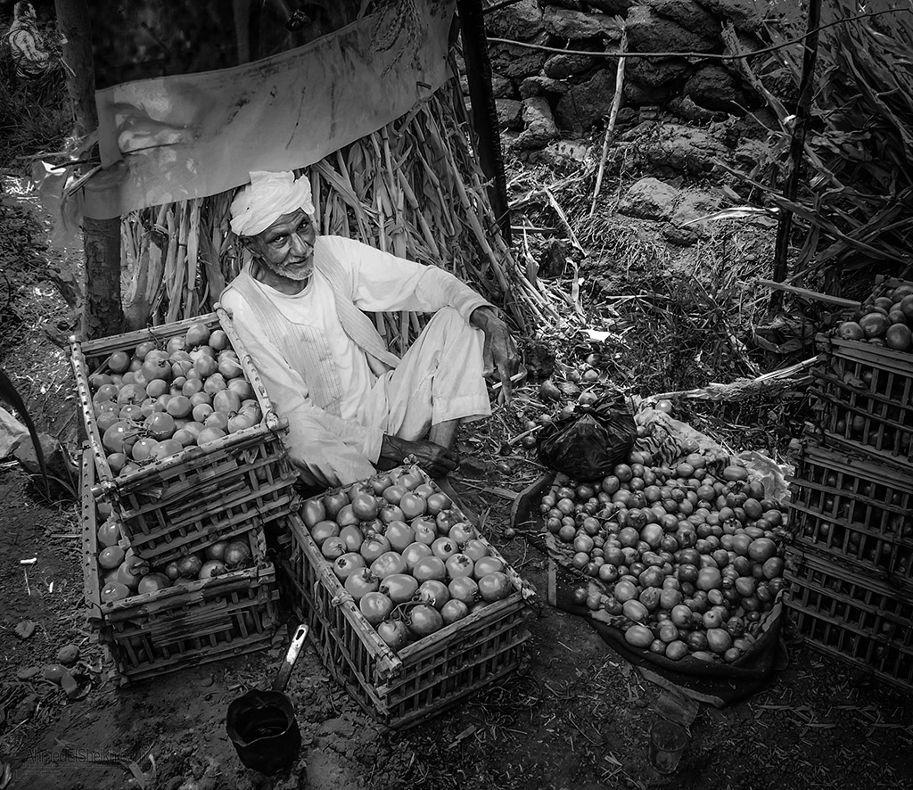 Farmer in his Farm After Collecting the tomato