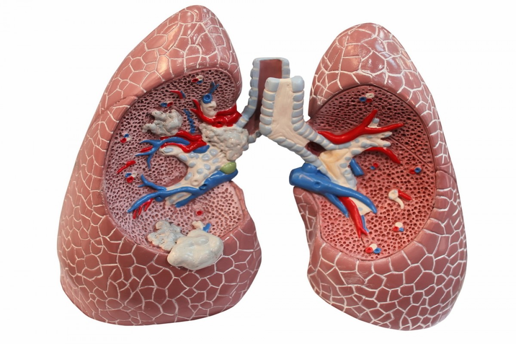مقدمة لأعراض إضطرابات الرئة
