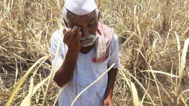 Photo of अतिवृष्टीने हवालदिल झालेल्या बळीराजासमोर नवे संकट
