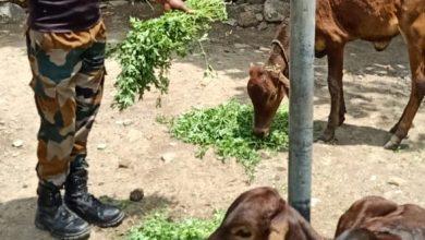 Photo of कोरोना काळात मुक्या प्राण्यांना पोलिसांचा आधार