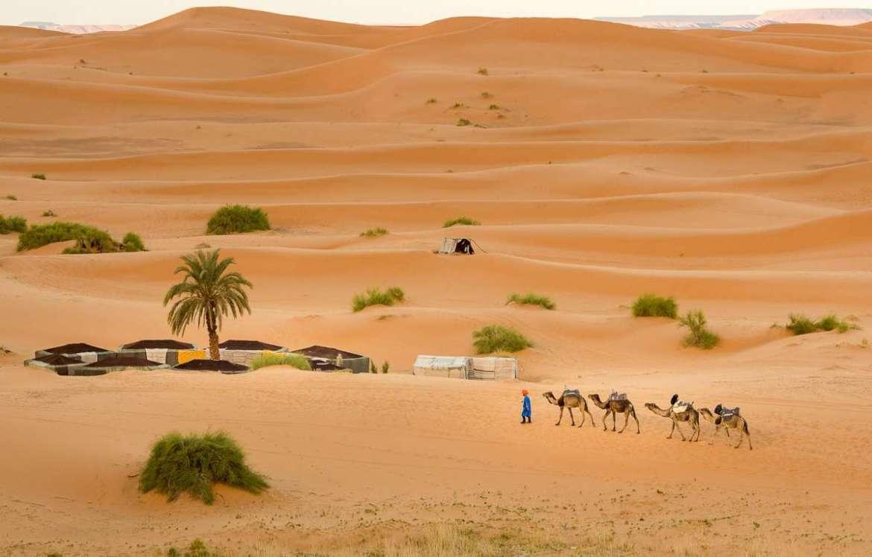 Kamelkarawane - So würden wir auch bald durch die Wüste shippern