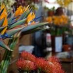 Reiseland Portugal - Blumen in der Markthalle von Funchal