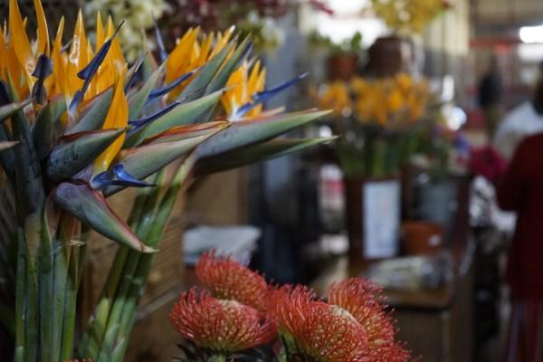 Reisebericht Blumeninsel Madeira –  Highlight zwischen Fußball, Kirche und schöner Aussicht