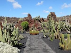 Der Jardin de Cactus - Kaktusgarten - im Garten