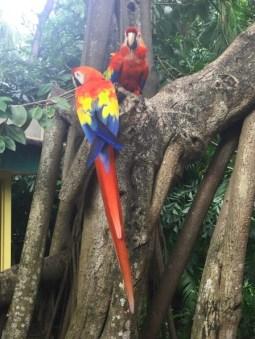 Hafen Oase - Ara Papageien am Baum