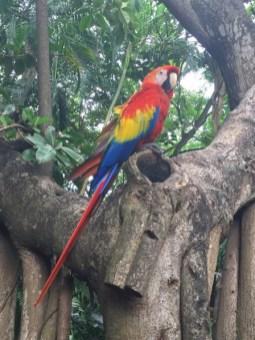 Hafen Oase - Ara Papagei am Baum