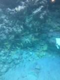 Halb-U-Boot - Ausflug