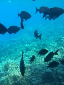 Halb-U-Boot - Fische