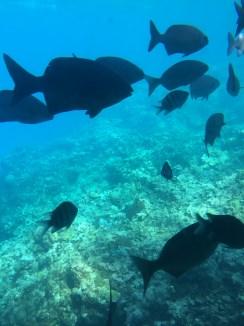 Halb-U-Boot - noch mehr Fische