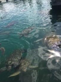 Schildkrötenfarm - Aquarium