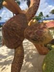 Schildkrötenfarm