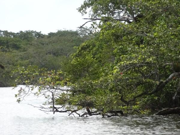 Fauna am Ufer